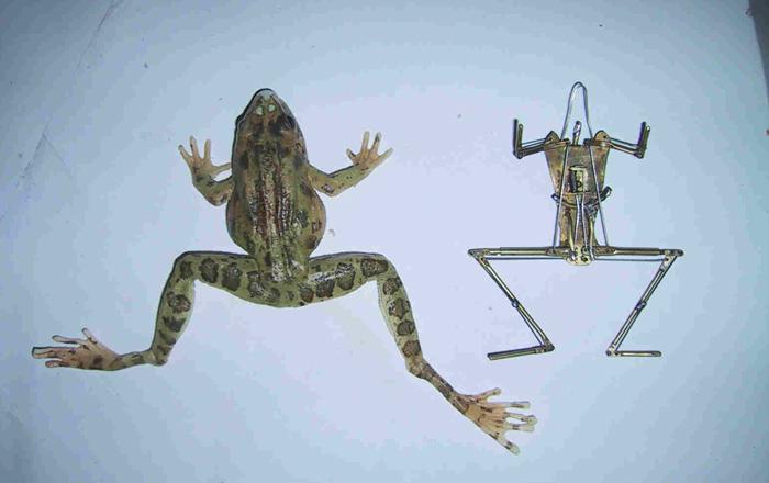frog_inside